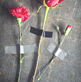 Three Red Flowers Taped To Wooden Background by Di Kerpan