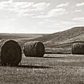 Three Rolls Of Hay by Lorraine Devon Wilke