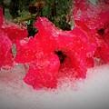 Three Rose Crystals  by Carolynn Trog