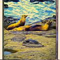 Three Sea Lions by Dominic Piperata