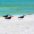 Three Skimmers by Marvin Spates