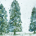 Three Snowy Spruce Trees by Dawn Derman