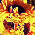 Three Sunflowers by Jerome Stumphauzer