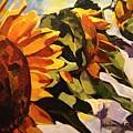 Three Sunflowers by Tim  Heimdal