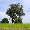 Three Tree Hill by Madeline Ellis