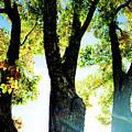 Three Tree Light by Jonah Vang