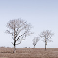 Three Trees - Nantucket by Henry Krauzyk