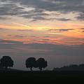Three Trees Bavaria by Michael Ziegler