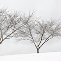 Three Trees In A Snowstorm by Lionel Everett