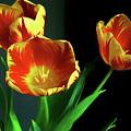 Three Tulips Photo Art by Sharon Talson