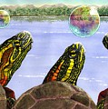 Three Turtles Three Bubbles by Catherine G McElroy