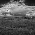 Three White Horse And Corral Bw by Rick Strobaugh