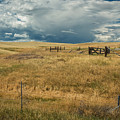 Three White Horses And Corral by Rick Strobaugh