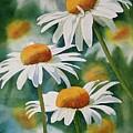 Three Wild Daisies by Sharon Freeman