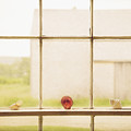 Three Window Shells by Craig J Satterlee