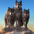 Three Wolves Watching You by Daniel Eskridge