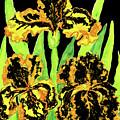 Three Yellow-black Irises, Painting by Irina Afonskaya