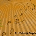 Through Desert by Dr Loifer Vladimir