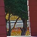 Through My Neighbors Porch by Lenore Senior