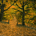 Through The Fallen Leaves by Frank Wilson