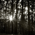Through The Forest 4 by Marjan Jankovic
