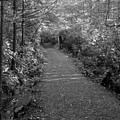 Through The Forest Canopy Black And White by Adam Jewell