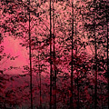 Through The Forest, Rose by Michael Ziegler