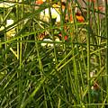 Through The Grass Curtain by Ian  MacDonald