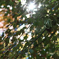 Through The Leaves 2 by LKB Art and Photography
