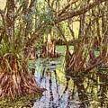 Through The Mangroves by Karen Regan