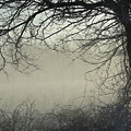 Through The Mist by Elizabeth Winter