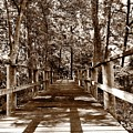 Through The Narrow Path  by S Forte Designs