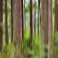 Through The Trees by Shanna Hyatt