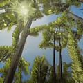 Through The Trees by William B Peairson IV