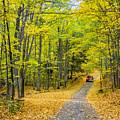 Through Yellow Woods 2 by Steve Harrington