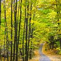 Through Yellow Woods by Steve Harrington