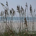 Thru The Sea Oats by Barb Montanye Meseroll