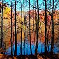 Thru Trees by Andrew Kazmierski