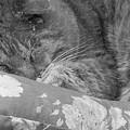 Thumbody Sleeping by Deborah Montana