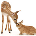 Thumper And Bambi by Warren Photographic