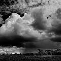 Thunderhead by Louis Dallara
