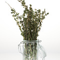 Thyme by Wolfgang Steiner