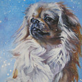 Tibetan Spaniel In Snow by Lee Ann Shepard
