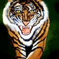 Tiger Charging by Darlene Green