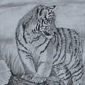 Tiger Cub 1 by Sheila Banga