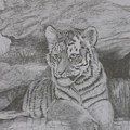 Tiger Cub 2 by Sheila Banga