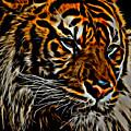 Tiger by David Pine