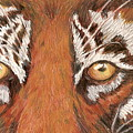 Tiger Eyes 2 by Patricia R Moore