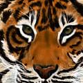 Tiger Eyes by Becky Herrera