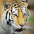 Tiger Eyes by Michael Peychich